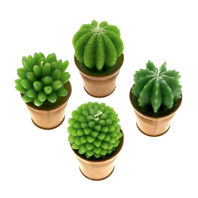 candele fantasy - candele cactus in vasetto